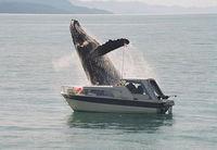 breachedwhale.jpg