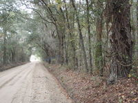 Quarterman Road with County Tape